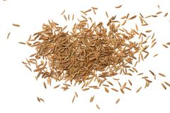 Cumin or caraway seeds isolated on white background. Top view royalty free stock photography