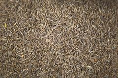 Cumin on the market Royalty Free Stock Images