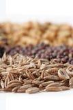 Cumin Seed Stock Image