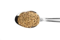 Cumin Seed Stock Photography