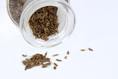 Cumin seed Royalty Free Stock Images
