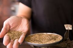 Cumin Seed or Caraway seeds. Herbal aroma food seasoning in herb store background Stock Image