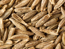 Cumin seed food background Stock Images