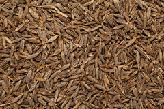 Cumin seed jeera(india) or Cuminum cyminum Stock Photo