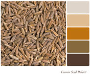 Cumin seed palette Royalty Free Stock Photography