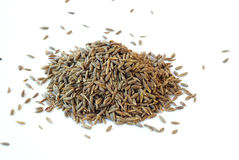 Cumin seeds Royalty Free Stock Image
