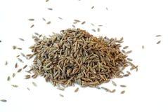 Free Cumin Seeds Royalty Free Stock Image - 17157716