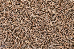 Cumin seeds background Stock Photography