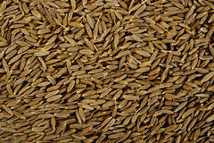 Cumin seeds. Background , as a backdrop texture Royalty Free Stock Photos