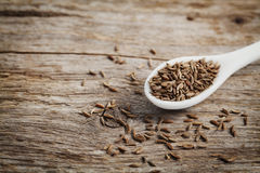 Cumin seeds or caraway in white spoon on wooden table Royalty Free Stock Image