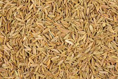 Cumin seeds Royalty Free Stock Photography