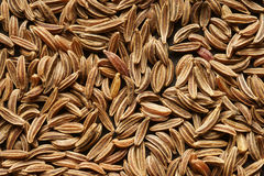 The cumin seeds. Extra close-up. Background Royalty Free Stock Photography