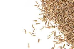 Cumin seeds isolated on white background Royalty Free Stock Photography
