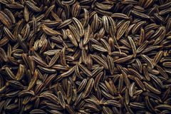 Cumin Seeds macro Background. Macro background texture of cumin seeds. Top view Stock Image