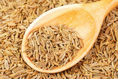 Cumin seeds macro and  wooden spoon as background Stock Image