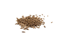 Cumin seeds Royalty Free Stock Photo