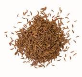 Cumin seeds stock images