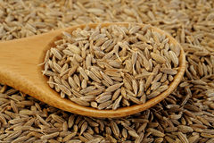 Cumin seeds. In wooden spoon Stock Images