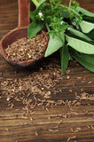 Cumin seeds on wooden spoon and fresh herbs Royalty Free Stock Image