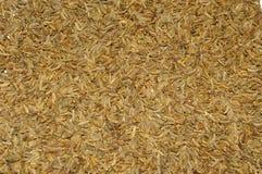 Cumin texture Stock Image