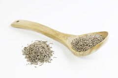 Cumin on a wooden cooking spoon Royalty Free Stock Photos