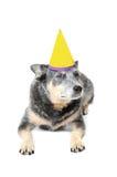 Cumpleaños del perro Imágenes de archivo libres de regalías