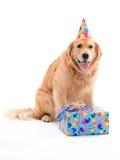Cumpleaños del perro perdiguero de oro fotografía de archivo libre de regalías