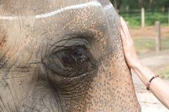 Cumprimentando um elefante Fotografia de Stock Royalty Free