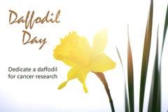 Cumprimento do dia do narciso amarelo Fotografia de Stock Royalty Free