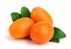 Cumquat或金桔与叶子在白色背景关闭 免版税库存图片