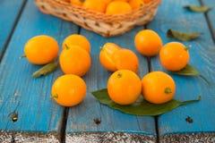Cumquat或金桔属野生桔子结果实与绿色叶子 免版税库存图片