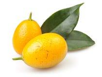Cumquat dwa Zdjęcia Stock