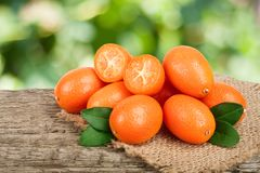 Cumquat or kumquat with leaf on old wooden table with blurry garden background Stock Photography