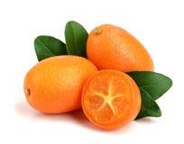 Cumquat lub kumquat z liściem odizolowywającym na białym tła zakończeniu up Zdjęcie Royalty Free