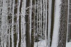Cumuli di neve nella foresta immagini stock libere da diritti