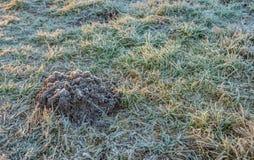 Cumulo di terra sollevato dalla talpa in erba glassata fotografia stock libera da diritti