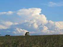 Cumulo-nimbus d'été se développant au-dessus du champ herbeux Photos stock