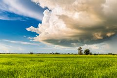 Cumulonimbus Clouds Over Rice Field. Big Cumulonimbus clouds over the paddy field, rainy season in countryside of Thailand Stock Photography