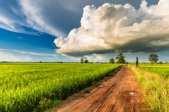 Cumulonimbus Clouds Over Rice Field. Big Cumulonimbus clouds over the paddy field, rainy season in countryside of Thailand Royalty Free Stock Photo
