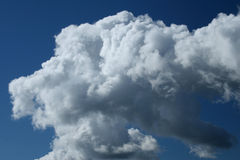 Cumulus. White clouds on a background of the dark blue sky Stock Image