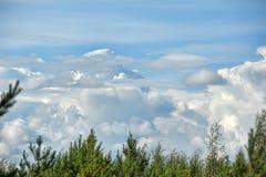 Cumulus chmury nad wierzchołkami drzewa Zdjęcie Royalty Free