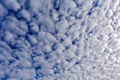 Cumulus clouds. Royalty Free Stock Photo