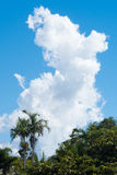 Cumulus clouds over palm trees. A vertical pillar of cumulus clouds above dense vegetation in Yeppoon, Queensland, Australia Stock Photo