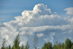 Cumulus clouds over the tops of  trees Stock Images