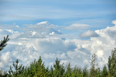 Cumulus clouds over the tops of  trees Royalty Free Stock Photo
