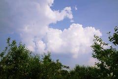 Cumulus d'été en ciel bleu au-dessus de champ de pommiers photos libres de droits