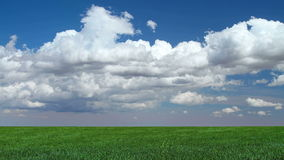 Cumulus de ressort au-dessus de pré herbeux clips vidéos