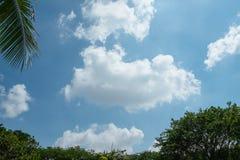 Cumulus et ciel bleu au-dessus des arbres luxuriants en été photographie stock