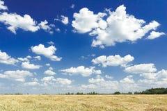 Cumulus na aero niebieskiego nieba koloru above zbierającym zbożowym goldenrod polu Fotografia Stock