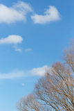 Cumulus white air clouds against blue sky Stock Images